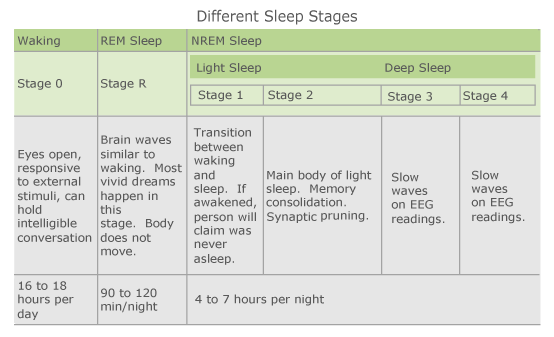 Different Sleep Stages